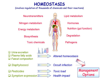 What is homeostasis / Tips for binary trading